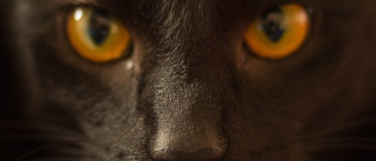 Portrait of black cat with yellow eyes from Visual Hunt