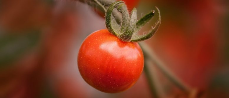 Tomato is More Proof that God Wanted us to be happy