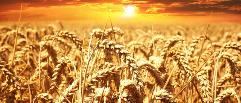 Organic Agro-Industrial